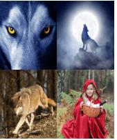 4 Immagini 1 Parola 4 Lettere LUPO