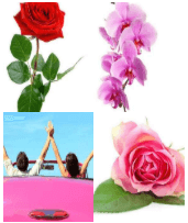 4 Immagini 1 Parola 4 Lettere ROSA