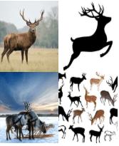 4 Immagini 1 Parola 5 Lettere CERVO