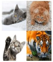 4 Immagini 1 Parola 5 Lettere GATTO