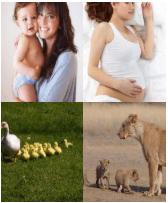 4 Immagini 1 Parola 5 Lettere MAMMA