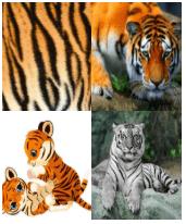 4 Immagini 1 Parola 5 Lettere TIGRE