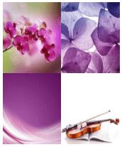 4 Immagini 1 Parola 5 Lettere VIOLA