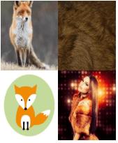 4 Immagini 1 Parola 5 Lettere VOLPE