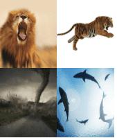 4 Immagini 1 Parola 6 Lettere FEROCE