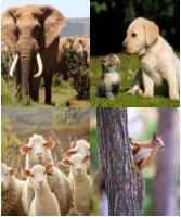 4 Immagini 1 Parola 7 Lettere ANIMALE