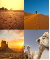 4 Immagini 1 Parola 7 Lettere DESERTO